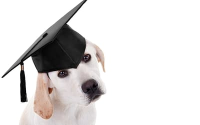 Scientific Dog Training – what's it all about?