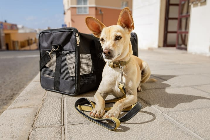 puppy-love-pet-sitters-dog-sitting-dc-cute-pup-sidewalk-dog-carrier